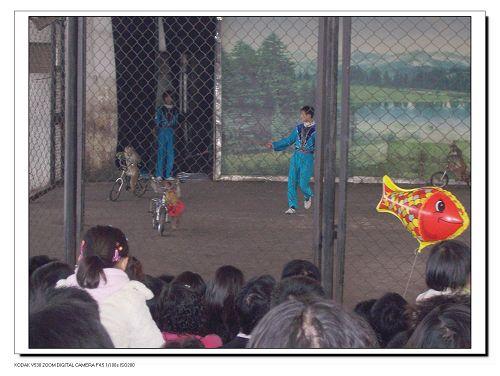 小猴子骑自行车-动物乐园走一走图片