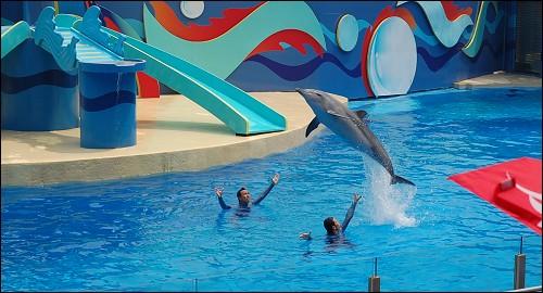 海豚表演开始咯!
