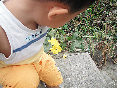 草,花,小蜜蜂图片