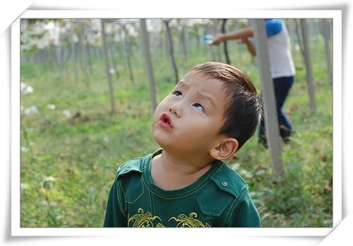 抬头检查下这串葡萄是否成熟好吃?!