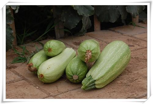 """还有小乖妈妈和多妈""""收获""""的葫芦瓜"""