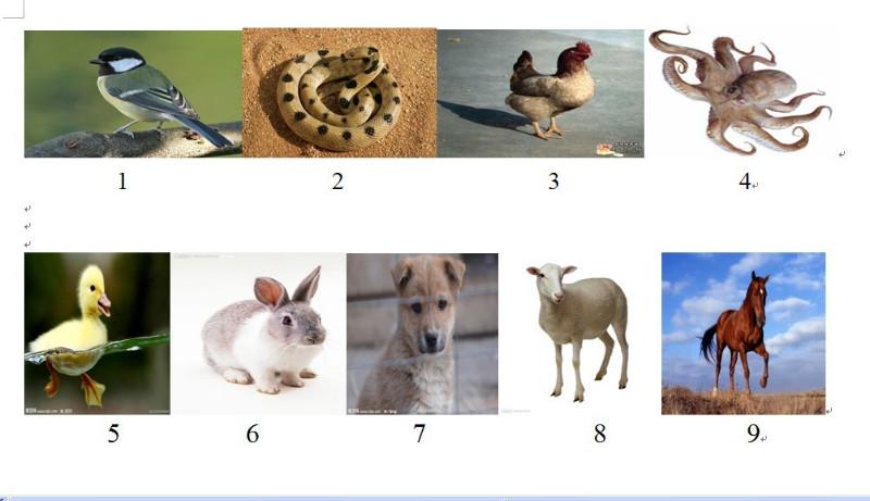 """六、规律题,问:图中""""?""""应是什么颜色.图如下:-小丸子的博客"""