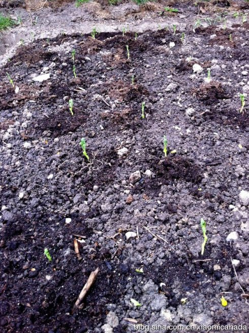 2012-04-26<wbr>育苗种菜