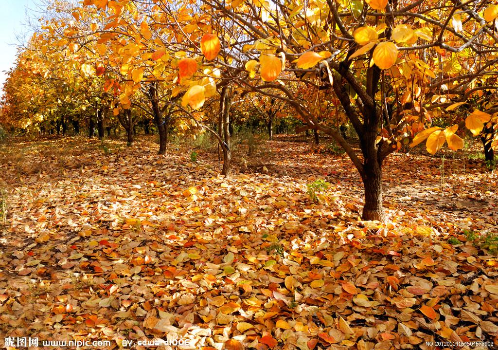 秋季落叶图片风景高清